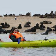 """So sehen Sie die Wiederholung von """"Wie robben Seebären?"""" online und im TV (Foto)"""