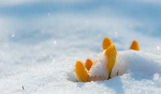 Wird der Frühling eiskalt? (Foto)