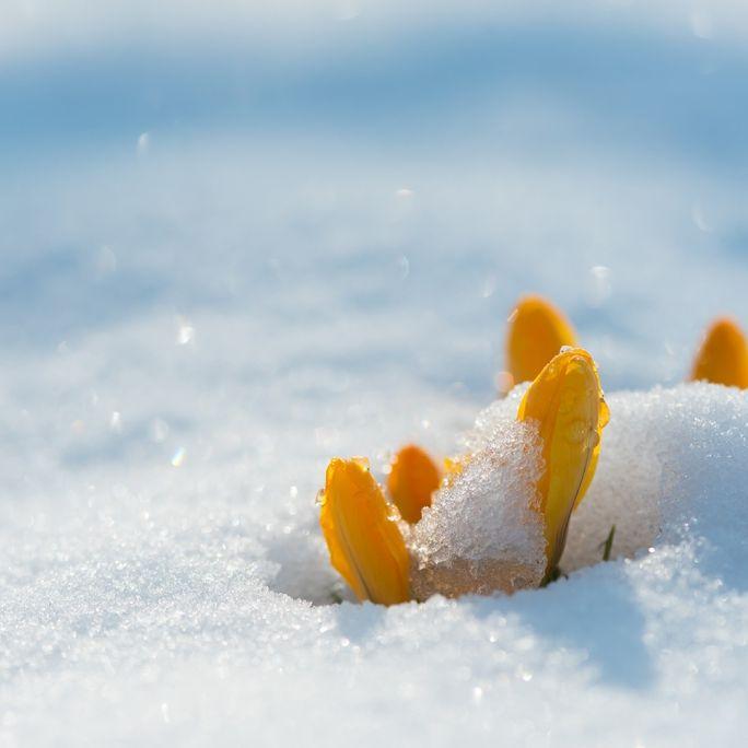 Kälte-Horror im Frühling? DAS prophezeit der 100-jährige Kalender (Foto)