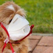 Hund positiv auf Sars-CoV-2 getestet! Sind Haustiere gefährdet? (Foto)