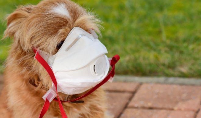 Coronavirus befällt ersten Hund