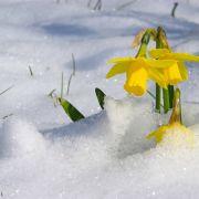 Winter-Einbruch im März? Meteorologen befürchten Schneebombe (Foto)