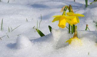 Kommt der Winter im März 2020 noch einmal zurück? (Foto)