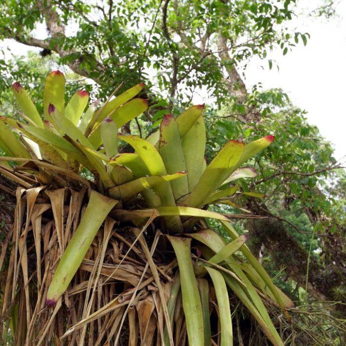 """Wiederholung von """"Brasilien - Trockene Tropen"""" online und im TV (Foto)"""