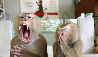 Aggressive Affen stürmen wegen Corona-Chaos Stadt in Thailand. (Foto)