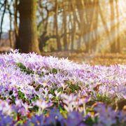 Hoch Helge bringt den Frühling! HIER steigen die Temperaturen (Foto)