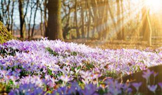 Am Wochenende bringt Hoch Helge den Frühling nach Deutschland. (Foto)