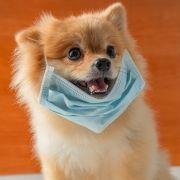 Hund stirbt nach Quarantäne! SO gefährlich ist Covid-19 für unsere Tiere (Foto)