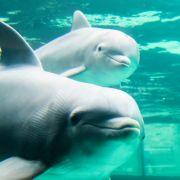 Mann hat Sex mit Delfin - und seine Ausrede macht sprachlos! (Foto)
