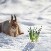 Erneut Polarluft im Anmarsch! Eisiger Frühling in Deutschland (Foto)