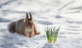 Wie lange dauert das winterliche Wetter an? (Foto)