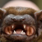 Droht uns die Apokalypse? Fledermäuse fallen tot vom Himmel (Foto)