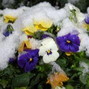 Erst schwitzen, dann bibbern! Schnee bis ins Flachland möglich (Foto)