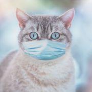 Katze krank an Covid-19! Sind unsere Vierbeiner doch in Gefahr? (Foto)