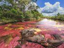 Eine der biblischen Plagen der Endzeit? Ein Gebirgsfluss nahe Ontario färbte sich blutrot. (Foto)