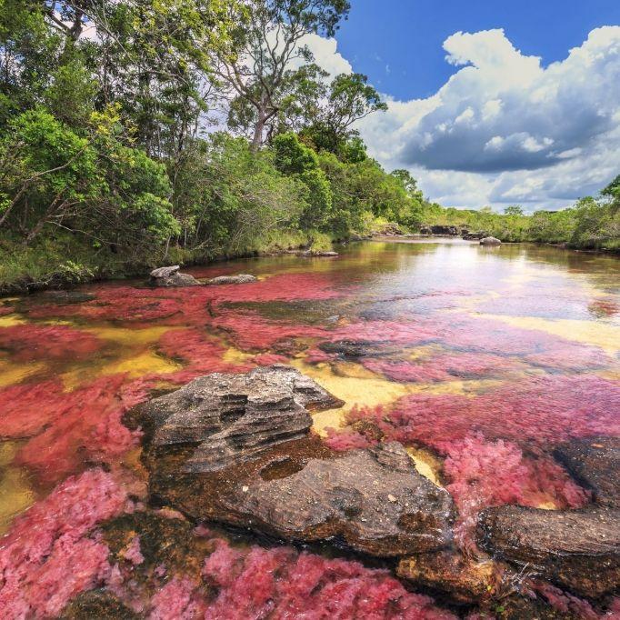 Fluss färbt sich blutrot! Ist Covid-19 etwa eine der biblischen Plagen? (Foto)