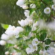 Regen-Wetter? DAS prophezeit uns der 100-jährige Kalender (Foto)