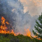 25 Hektar Wald gefährdet! Feuer wütet in Brandenburg (Foto)