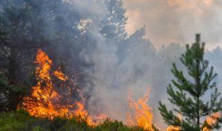 Die Temperaturen steigen am Sonntag. Dadurch erhöht sich gleichzeitig die Waldbrandgefahr. (Foto)