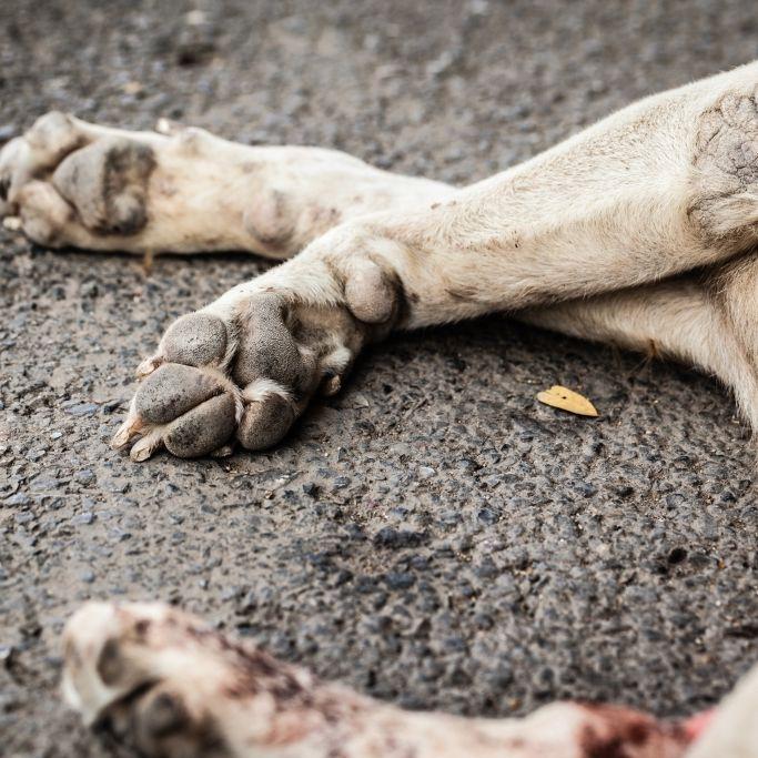 Hund brutal ermordet und im Herd gebacken (Foto)