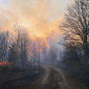 Kaum Löscherfolge! Radioaktiv verseuchter Wald lodert weiter (Foto)