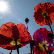 Bis zu 30 Grad! Meteorologen erwarten Hitze nach Ostern (Foto)