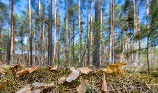 Die anhaltende Dürre macht der Natur zu schaffen. (Foto)