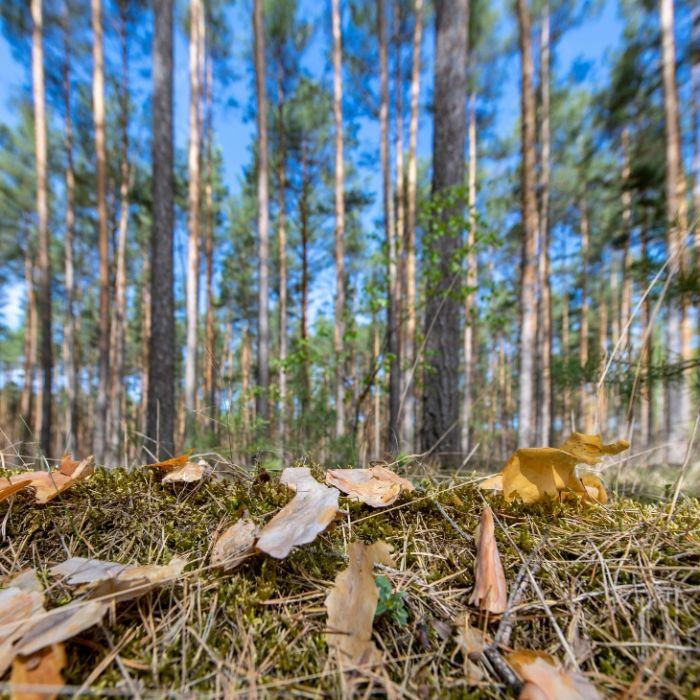 Dürre-Horror! Sommerwetter lässt Waldbrandgefahr steigen (Foto)