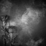 Suizid-Drama mit 33 Jahren! Playmate nimmt sich das Leben (Foto)