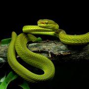 Sensation! Forscher benennen Schlange nach beliebter Figur (Foto)