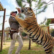 Tierquälerei! Er soll über 100 Tiger gequält und getötet haben (Foto)