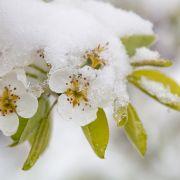 Eisige Kälte? DAS prophezeit der 100-jährige Kalender (Foto)