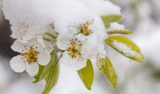 Droht uns eisige Kälte im Mai? (Foto)