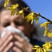 Coronavirus bei Asthma und Allergien? HIER gibt's am 20. Mai Expertenrat (Foto)