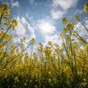 Schmuddelwetter-Alarm - nur HIER gibt's Frühling und 20 Grad! (Foto)