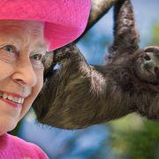 Krokodil, Faultier und Co.! DIESE bizarren Haustiere gehören der Queen (Foto)