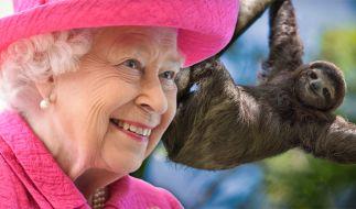 Queen Elizabeth II. soll ein Faultier besitzen. (Foto)