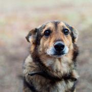 Zurückgelassen! Hund Cupid wartet wochenlang auf Rückkehr seiner Familie (Foto)
