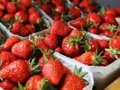 Diese Erdbeeren sehen zum Anbeißen aus! (Foto)