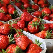 Würg! Salzwasser lockt Ekel-Würmer aus Erdbeeren (Foto)