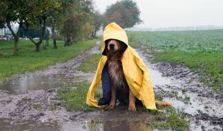 Am Wochenende kündigt sich Regen an. (Foto)