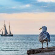 Urlaub an der Küste trotz Corona! DAS ist verboten (Foto)