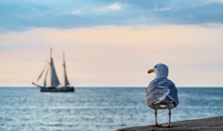 Auch an der Ost- und Nordsee müssen Corona-Regeln eingehalten werden. (Foto)