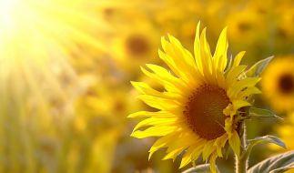 Können wir uns auf einen sonnigen Juni freuen? (Foto)