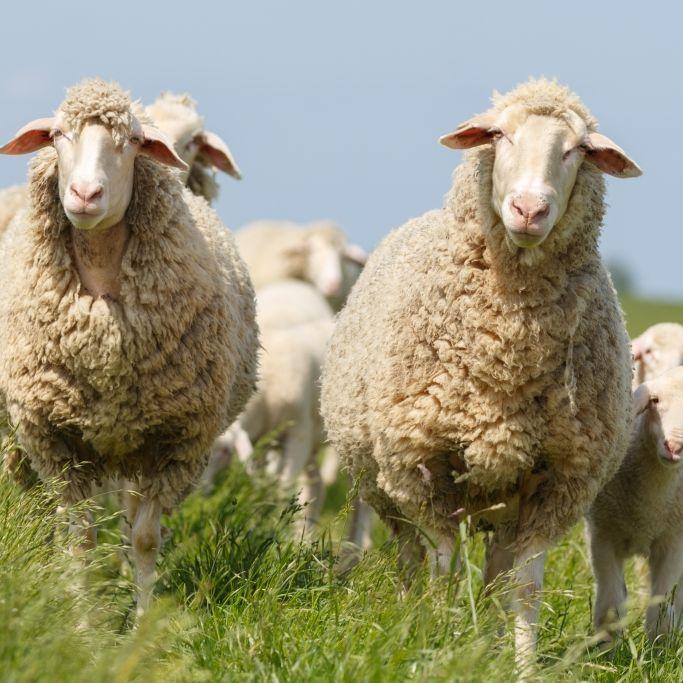 Gewitter und Hagel! Schlägt die Schafskälte eiskalt zu? (Foto)