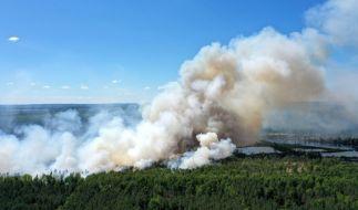 In Brandenburg wurde die Waldbrandstufe fünf ausgerufen. (Symbolfoto) (Foto)