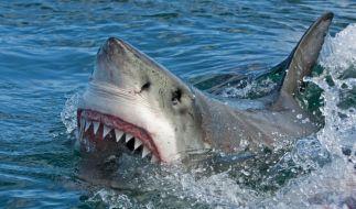 In Australien wurde ein Surfer von einem Weißen Hai getötet. (Foto)