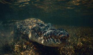 Immer wieder töten Krokodile Menschen. (Foto)