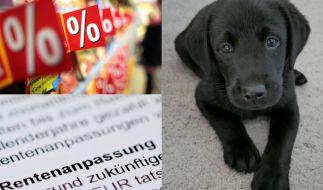 Ob Mehrwertsteuersenkung, Rentenerhöhung oder Corona-Meldepflicht für Haustiere: Im Juli 2020 ändert sich in Deutschland einiges. (Foto)