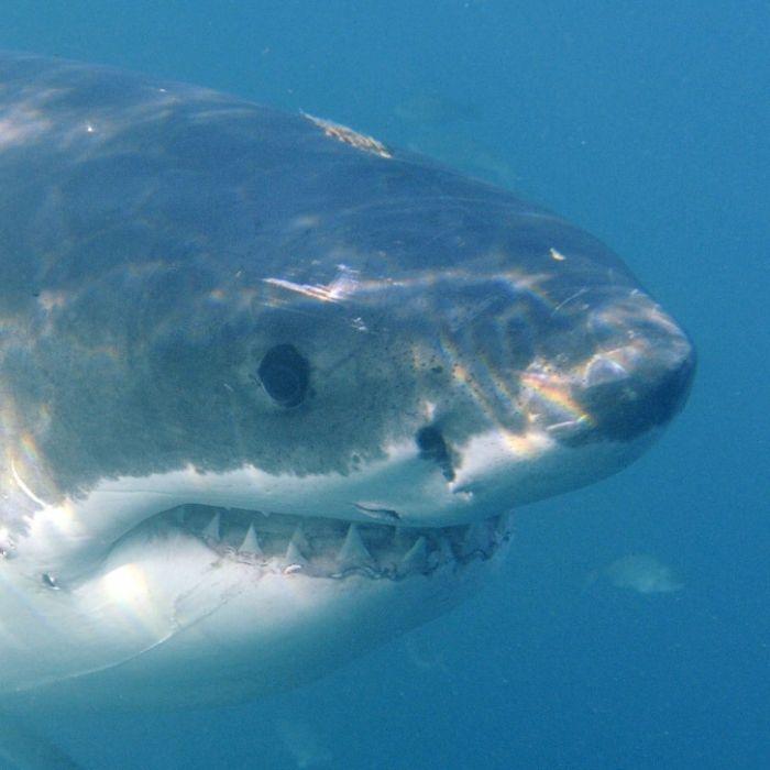 Hai beißt Teenager (15) tot (Foto)